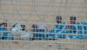 [Image: Israeli-fence-300x173.jpg]