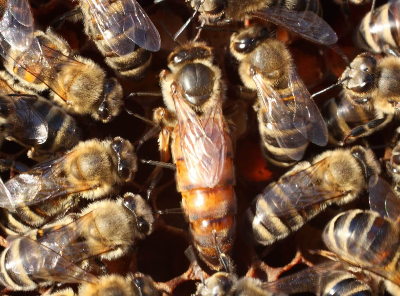 Bees commonly exterminate their fellows if this is beneficial to the hive.